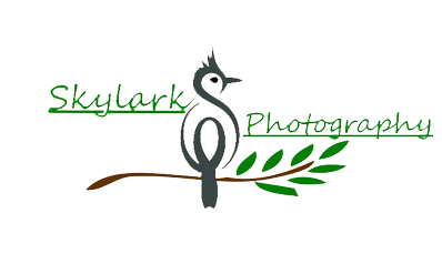 Skylark Photography